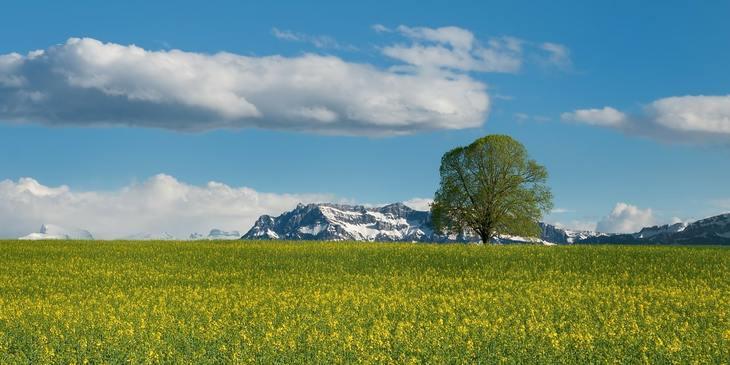 Получится ли у Швейцарии продлить мораторий на ГМО