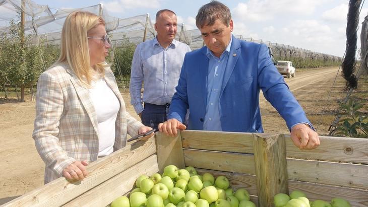 Урожай крымских летних яблок 2021 превысил 20 тысяч тонн