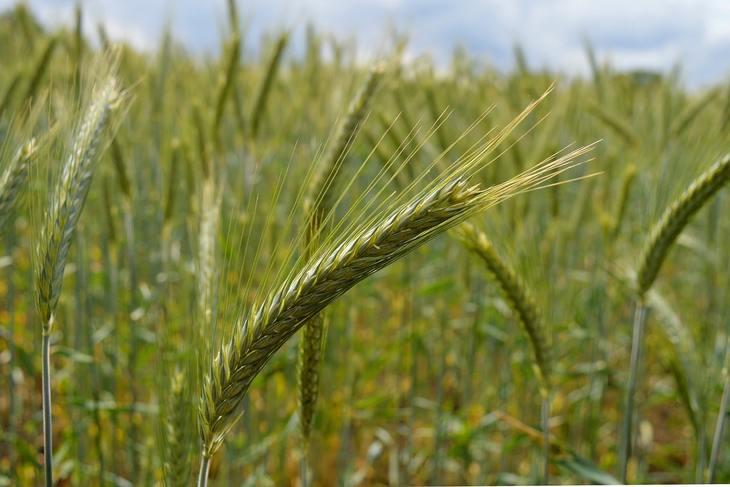 Минсельхоз России проработает возможность включения импортеров органики в единый государственный реестр