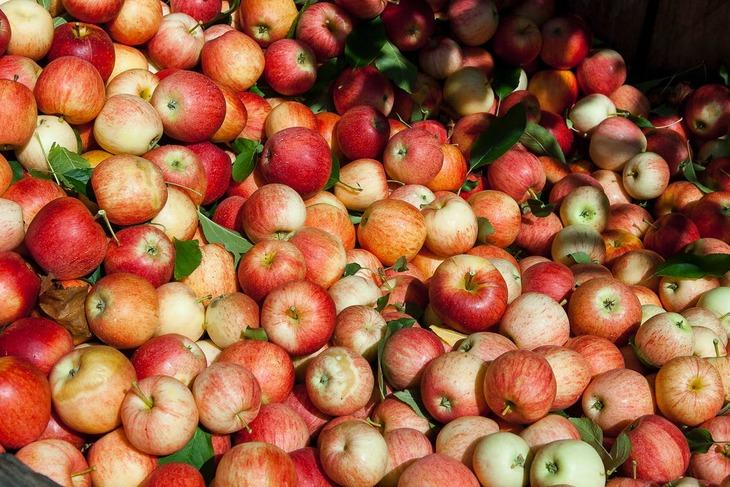 Производители яблок в Польше выступают против ценовой политики торговых сетей