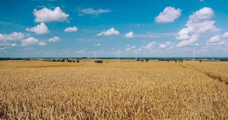 Сбор зерновых в России достиг 100 млн тонн