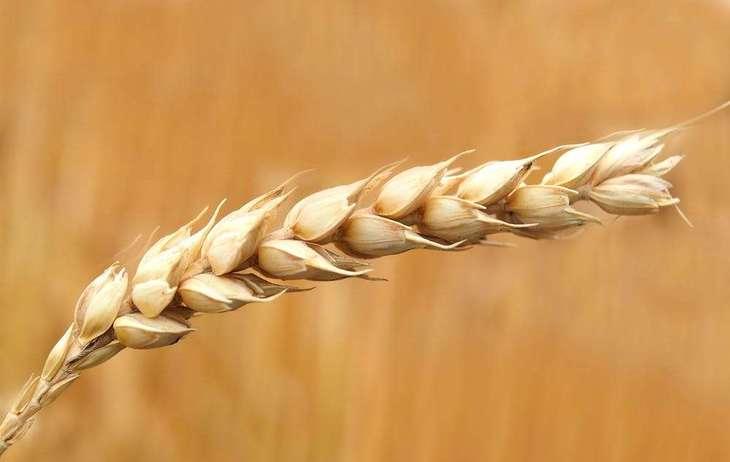 Правительство Великобритании планирует снять ограничения на использование генетически модифицированных растений и животных