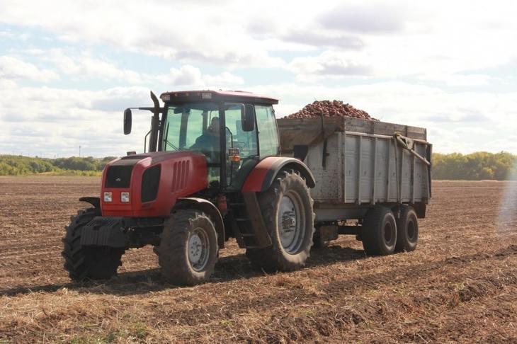 Якутский картофель стал гордостью Оренбургской области