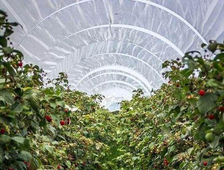 В тепличных хозяйствах Германии планируют использовать рециркулированную воду