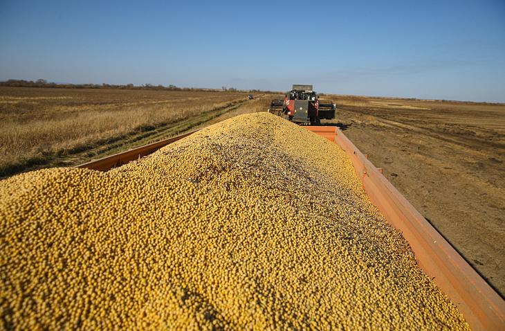 Почти 140 тысяч тонн сои намолотили сельхозпроизводители Приморья