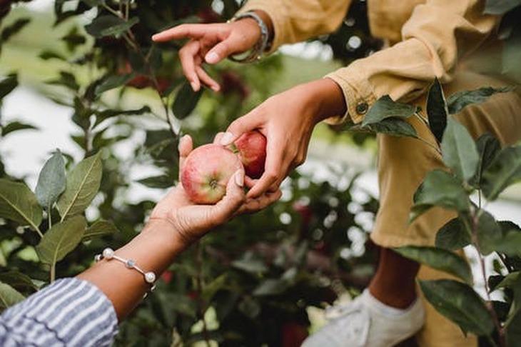 Осенняя обрезка плодовых деревьев в саду: как делать ее правильно, чтобы не причинить вред растениям