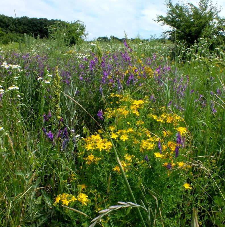 поле для пчел