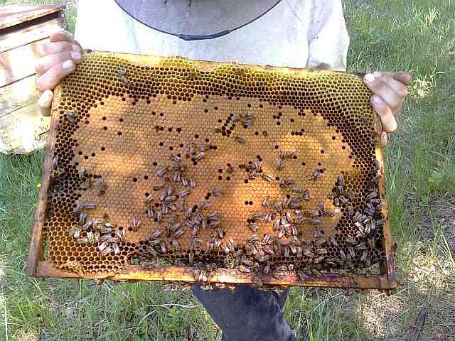 Как сделать чтобы пчелы не роились видео