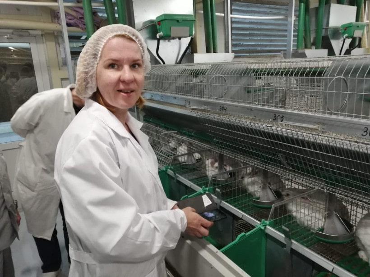разведение породы кроликов новозеландская белая