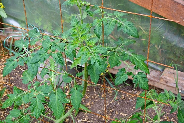 решетка для томатов