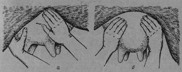 массаж вымени - поглаживание долей
