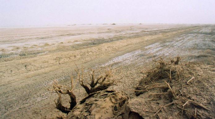 солено щелочные почвы в Китае