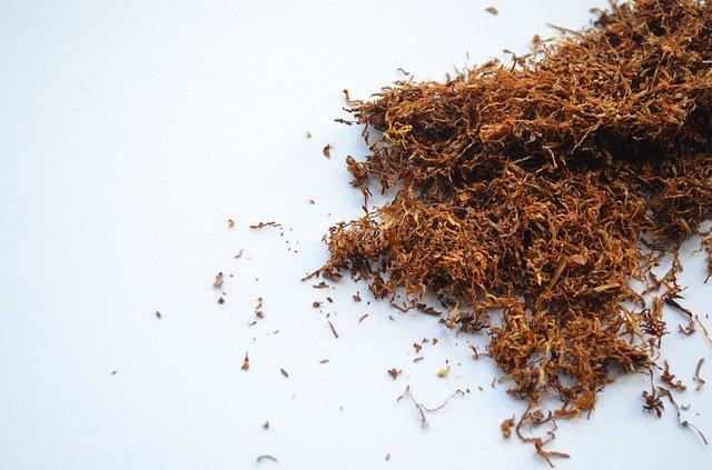 табак как инсектицид