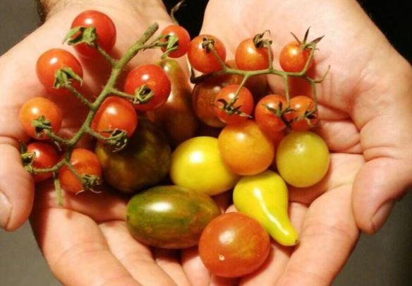вишневый бомбон томаты