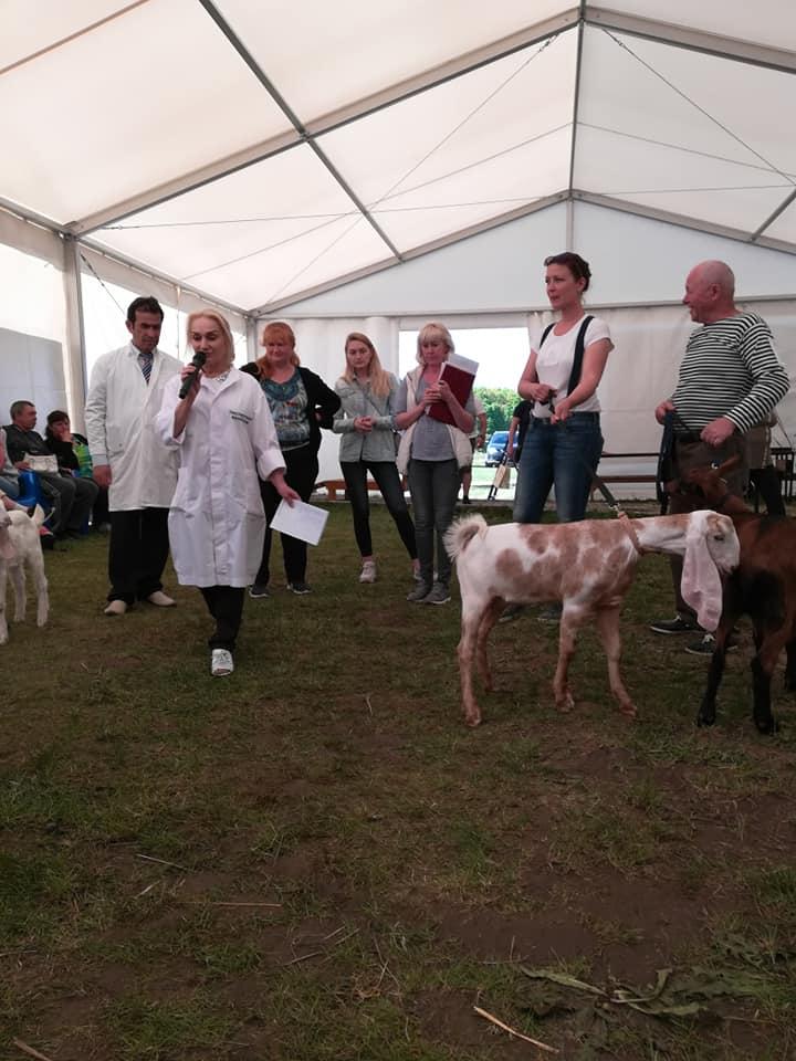 выставка коз в Туле