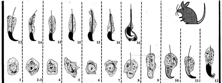 kakoy-nabor-hromosom-v-spermii
