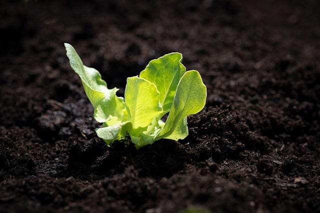 зачем растениям нужен азот