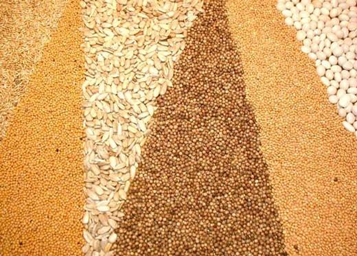 Международный совет по зерну в новом отчете увеличил прогноз мирового производства зерна