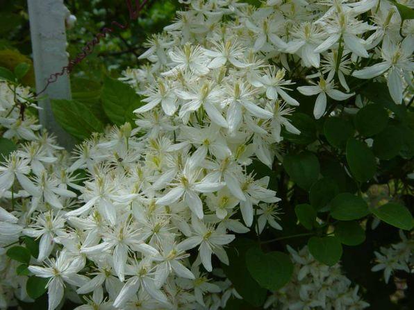 Садовые цветы и растения. 0e8cd790d4dfa89f78c6f666e4551734.jpg