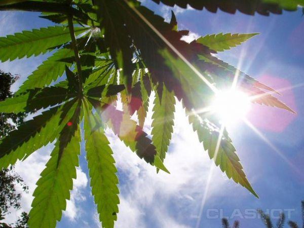 Конопля защита как употреблять лечебную марихуану