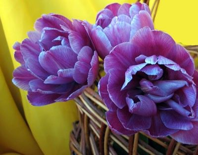 Папоротник домашний садовые цветы